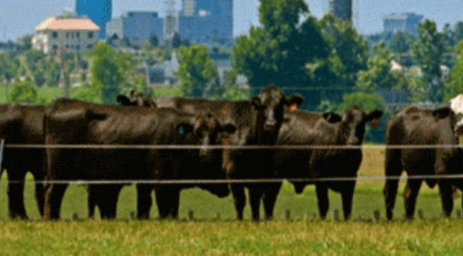US Beef Herd at All Time Low